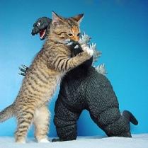 funny-picture-Godzilla-cat-picture-Gen-Kanai