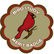 cat-scout-merit-badge-bird-study3