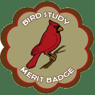 cat-scout-merit-badge-bird-study3