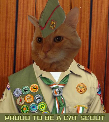 cat scouts 2